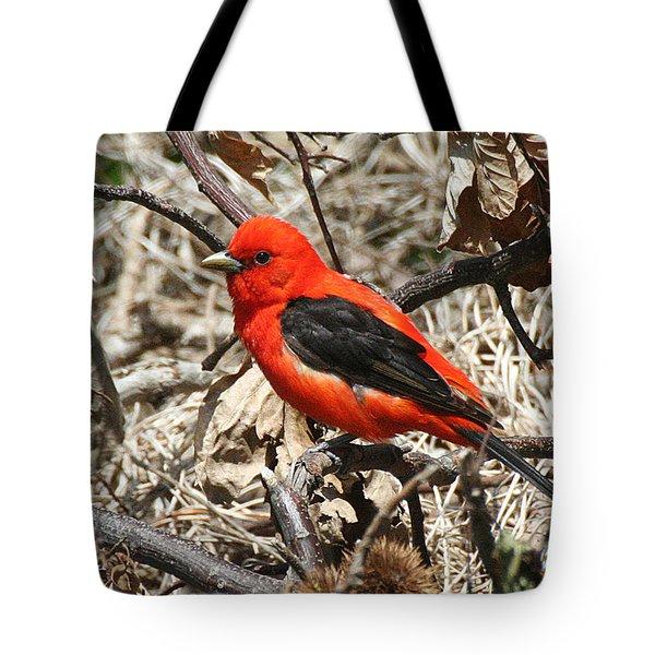 Scarlet Tanager Tote Bag