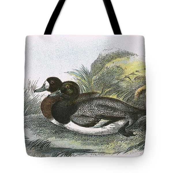 Scaup Duck Tote Bag by English School