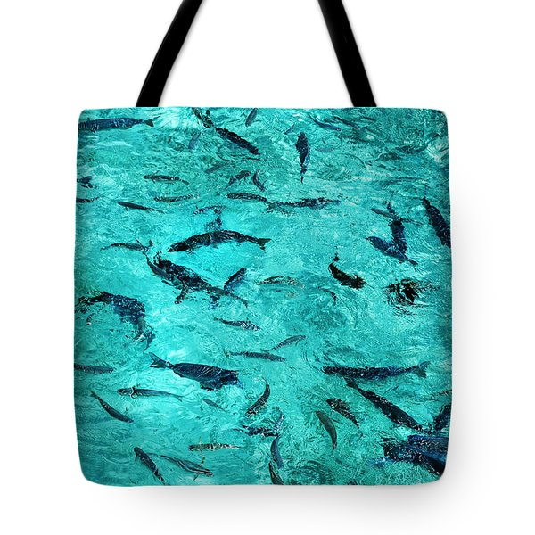 School Of Fishes In The Transparent Water Tote Bag by Jenny Rainbow