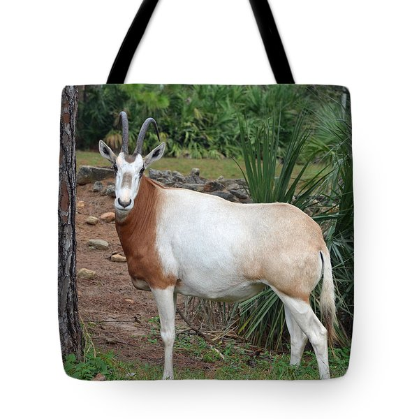 Scimitar Horned Oryx Tote Bag by Richard Bryce and Family