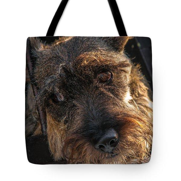 Scottish Terrier Closeup Tote Bag by Jess Kraft