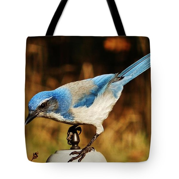 Tote Bag featuring the photograph Scrub Jay by VLee Watson