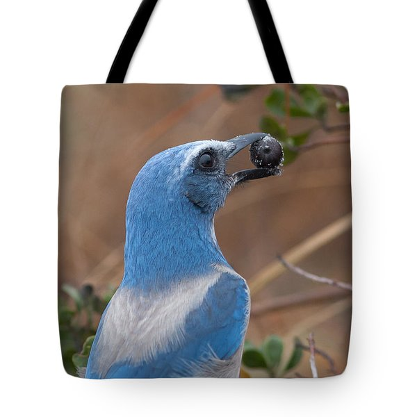 Tote Bag featuring the photograph Scrub Jay With Acorn by Paul Rebmann