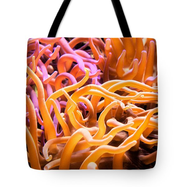 Sea Anemone  Tote Bag by Swank Photography
