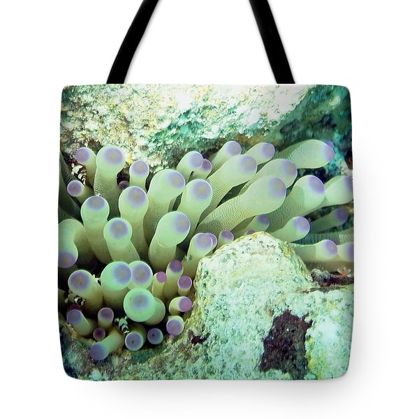 Tote Bag featuring the photograph Sea Anemone With Squat Anemone Shrimp Family by Amy McDaniel
