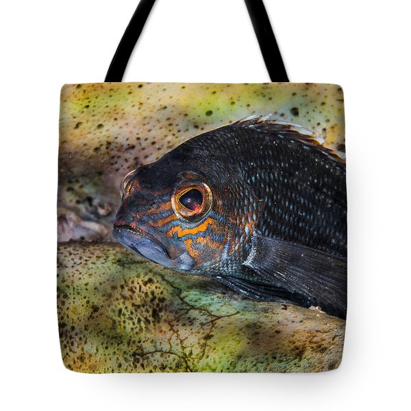 Seabass In A Shell Tote Bag