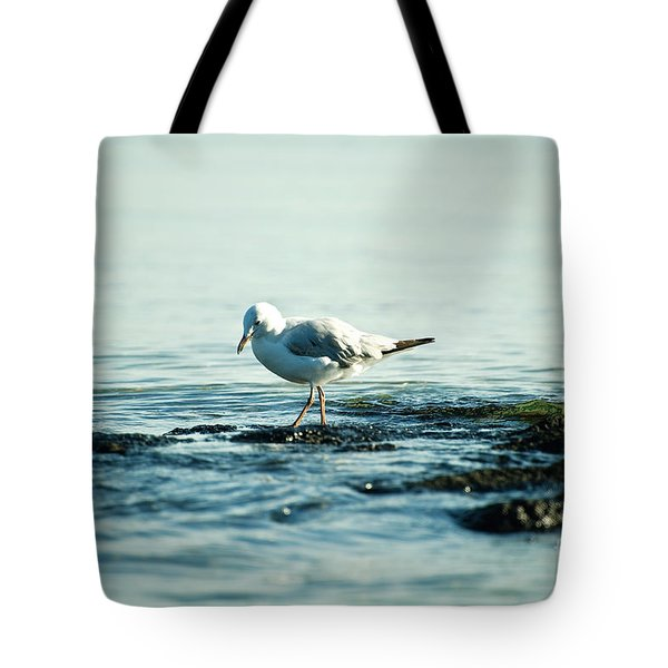 Tote Bag featuring the photograph Seagull Hunting by Yew Kwang