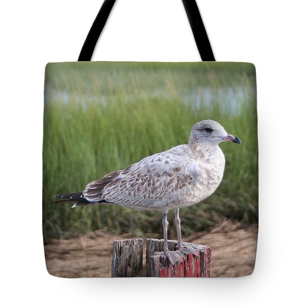 Tote Bag featuring the photograph Seagull by Karen Silvestri