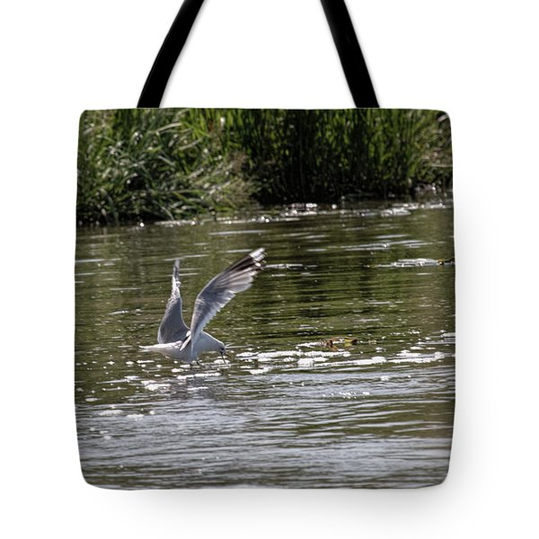 Tote Bag featuring the photograph Seagull Searching Food by Leif Sohlman