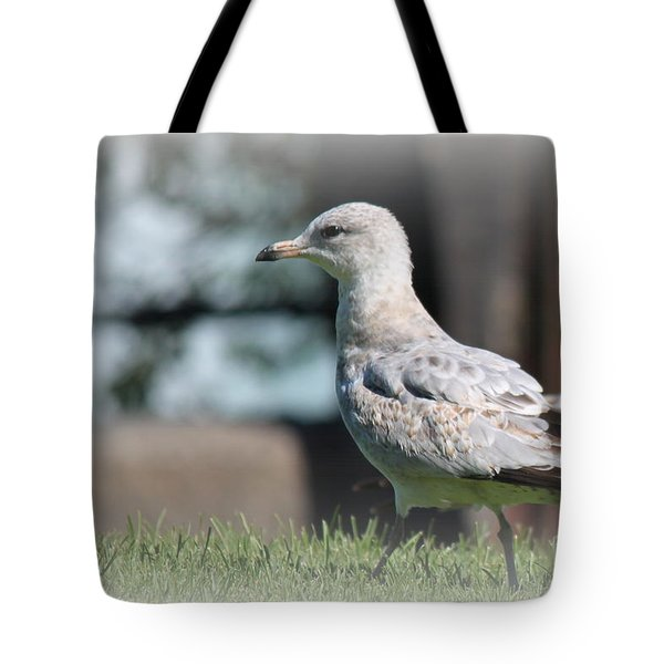 Seagulls 1 Tote Bag
