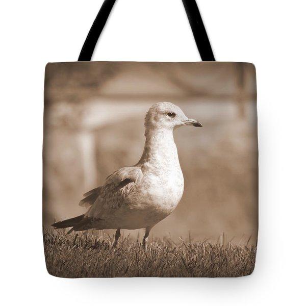 Seagulls 2 Tote Bag