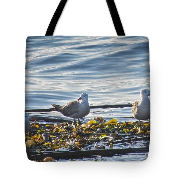 Seagulls In Victoria Bc Tote Bag