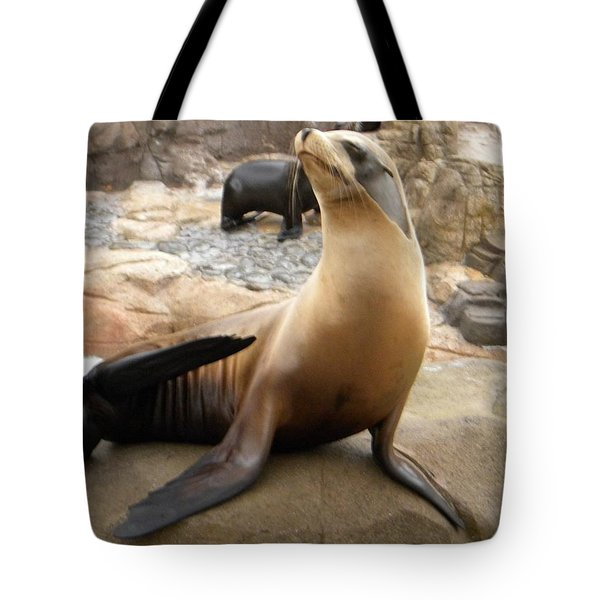 Tote Bag featuring the photograph Seal In The Spotlight by Amanda Eberly-Kudamik