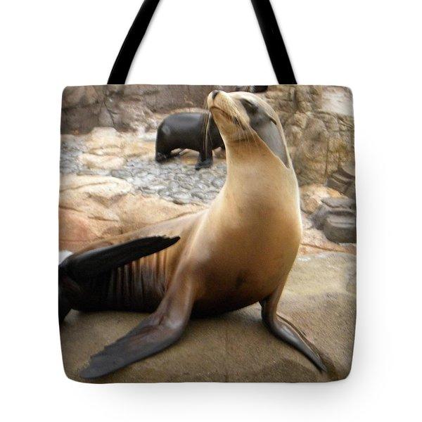 Seal In The Spotlight Tote Bag by Amanda Eberly-Kudamik