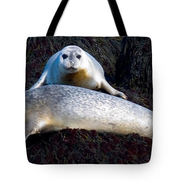Seal Massage 5662 Tote Bag by Brent L Ander