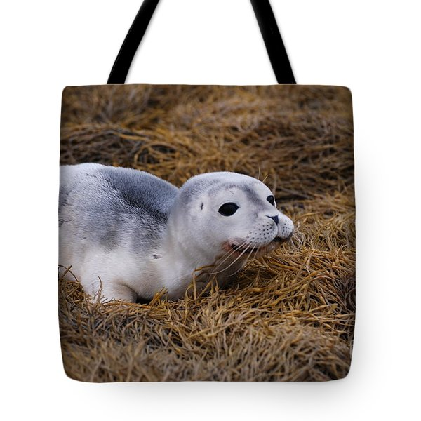 Seal Pup Tote Bag by DejaVu Designs