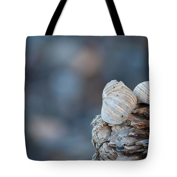 Seashells On Driftwood  Tote Bag by Brian Boudreau
