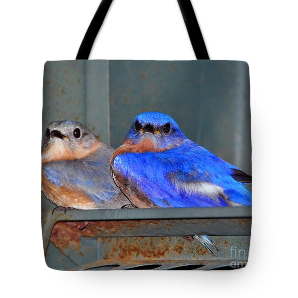 Seeking Shelter Tote Bag by Al Powell Photography USA