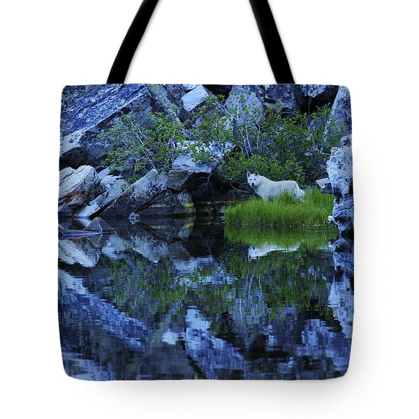 Tote Bag featuring the photograph Sekani Wild by Sean Sarsfield