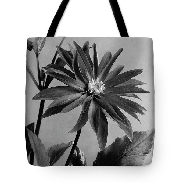 Semi-double Dwarf Pigmy Dahlia Flower Tote Bag