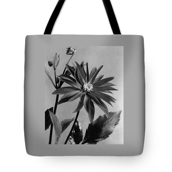 Semi-double Dwarf Pigmy Dahlia Flower Tote Bag