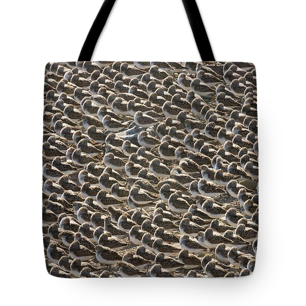 Semipalmated Sandpipers Sleeping Tote Bag