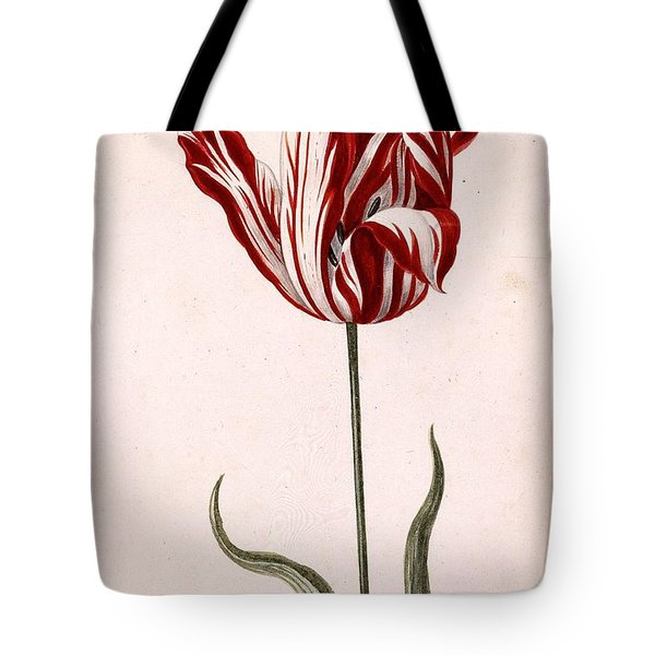 Tote Bag featuring the painting Semper Augustus by Celestial Images