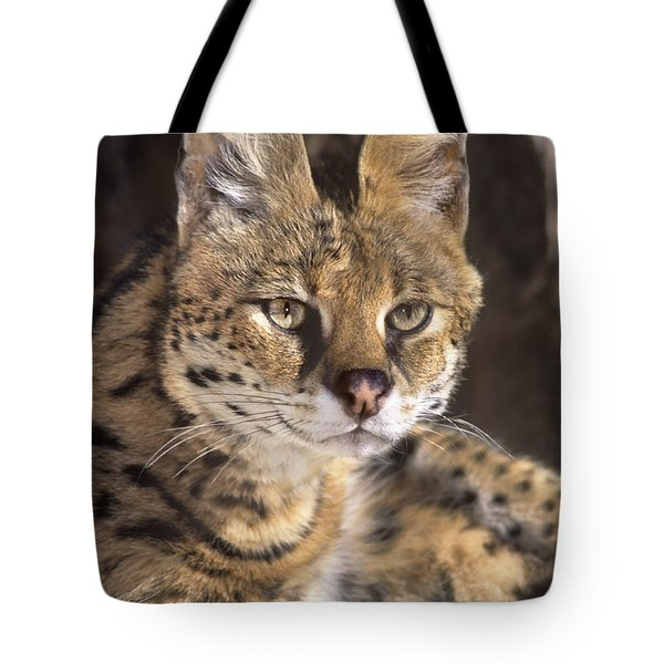 Tote Bag featuring the photograph Serval Portrait Wildlife Rescue by Dave Welling