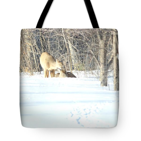 Tote Bag featuring the photograph Sharing And Caring by Dacia Doroff