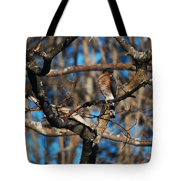 Tote Bag featuring the photograph Sharp Shinned Hawk by Mim White