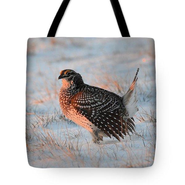 Sharptail Sunrise Tote Bag