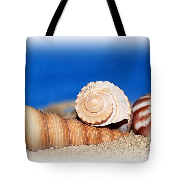 Shells In Sand Tote Bag by Francie Davis