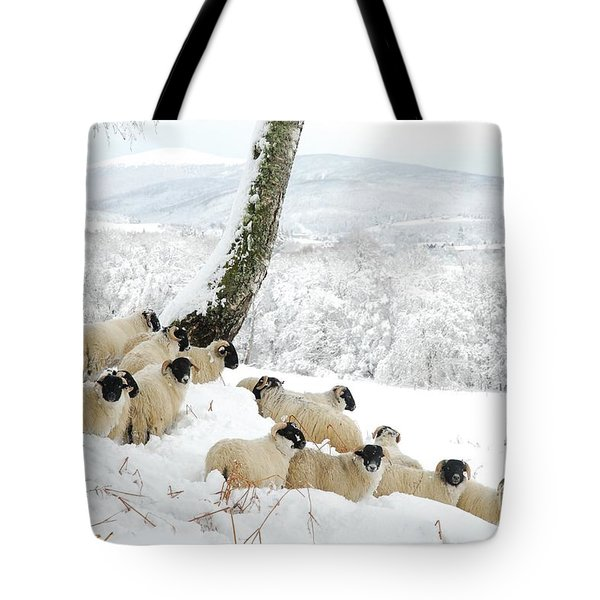 Sheltering Flock Tote Bag by John Kelly