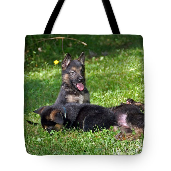 Shepherd Pups 20 Tote Bag by Aimee L Maher Photography and Art Visit ALMGallerydotcom