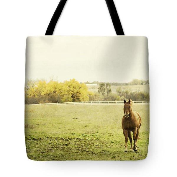 Shiloah On The Run Tote Bag