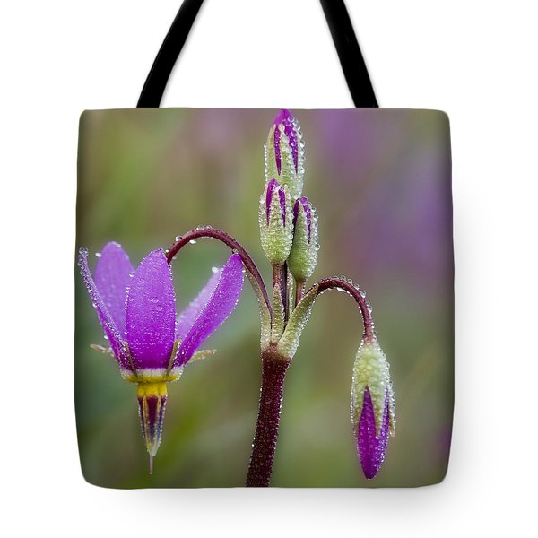 Tote Bag featuring the photograph Shooting Stars Square by Sonya Lang