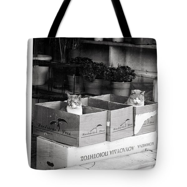 Tote Bag featuring the photograph Shop Window Cats by Laura Melis