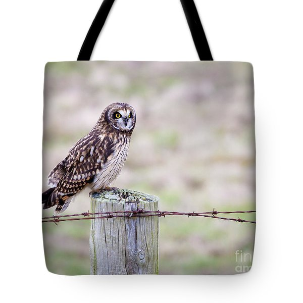 Short Eared Owl Boundary Bay Tote Bag by Chris Dutton