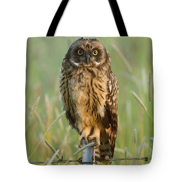 Short-eared Owl Tote Bag by Doug Herr