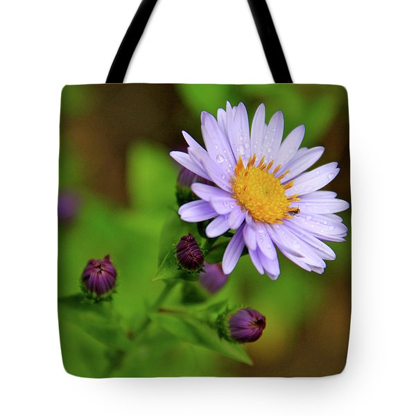 Showy Aster Tote Bag by Ed  Riche
