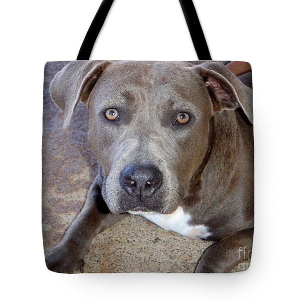 Shy Pit Bull Puppy Tote Bag by Mary Deal