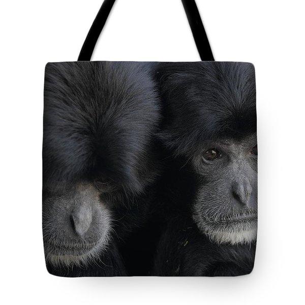 Siamang Pair Tote Bag