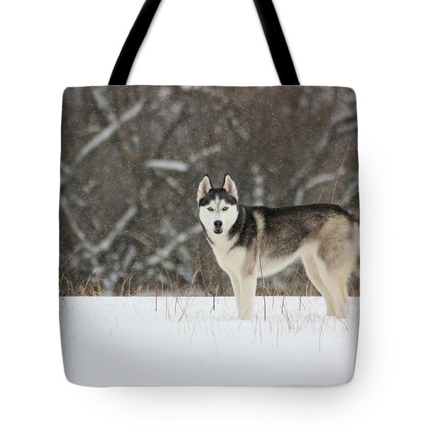 Siberian Husky 20 Tote Bag by David Dunham