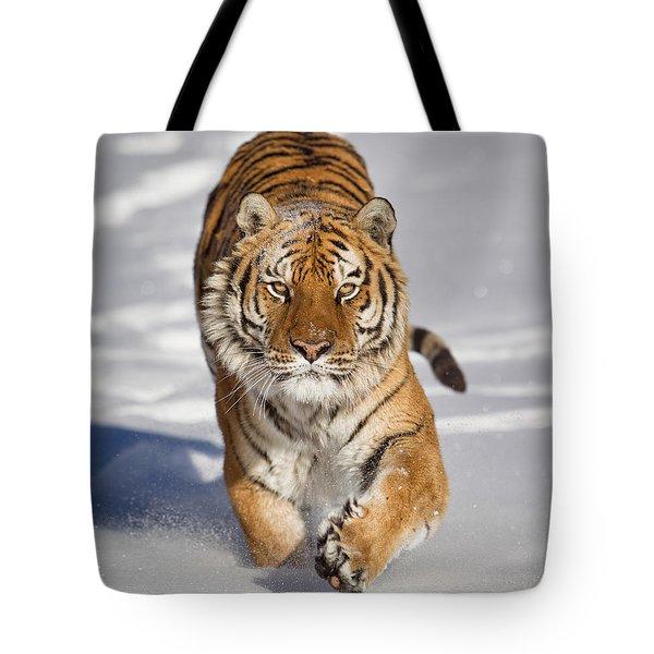 Siberian Tiger Coming Forward Tote Bag