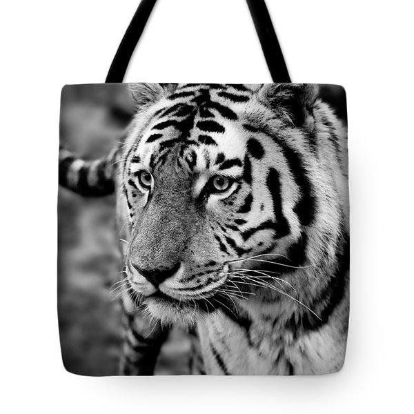 Siberian Tiger Monochrome Tote Bag by Semmick Photo