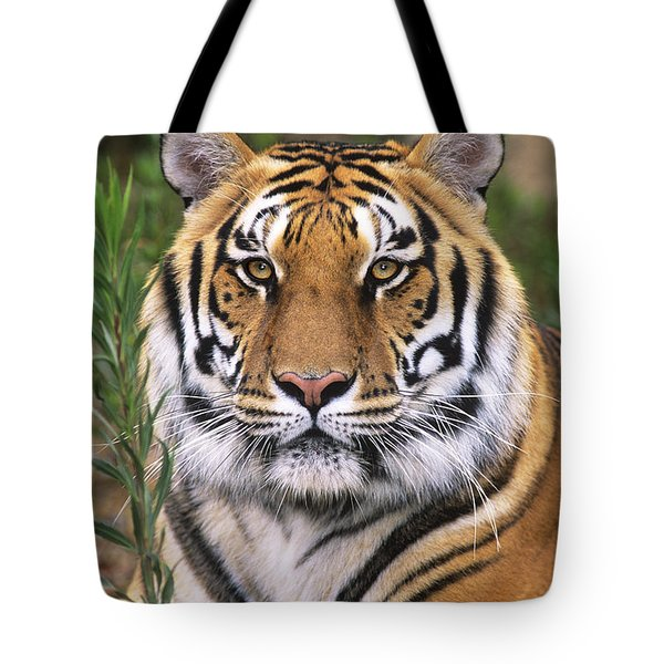 Tote Bag featuring the photograph Siberian Tiger Staring Endangered Species Wildlife Rescue by Dave Welling