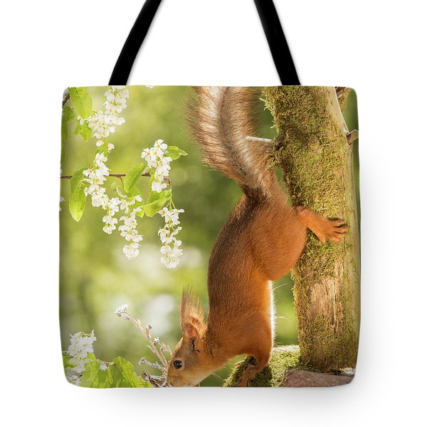 Side View Of Red Squirrel Climbing Tote Bag