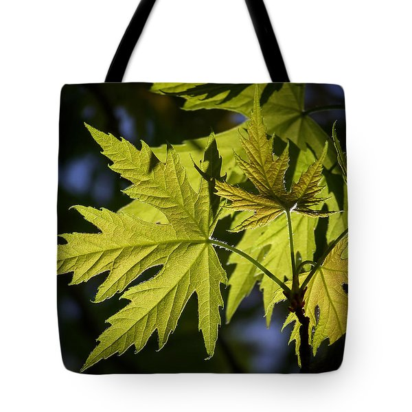 Silver Maple Tote Bag