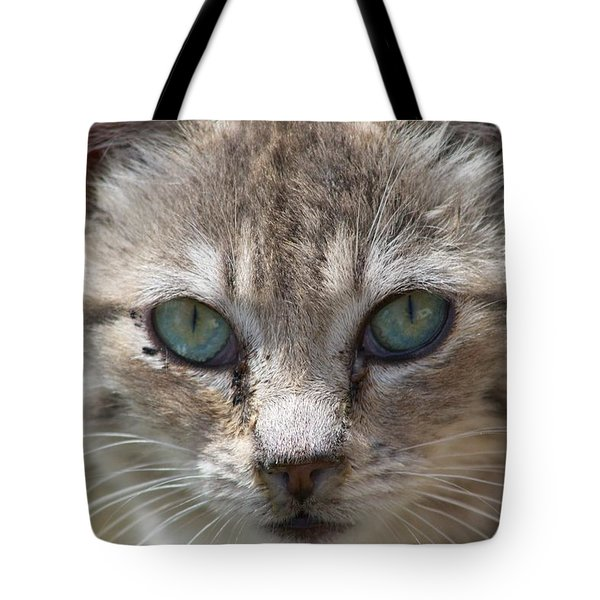 Silver Tabby But What Color Eyes Tote Bag