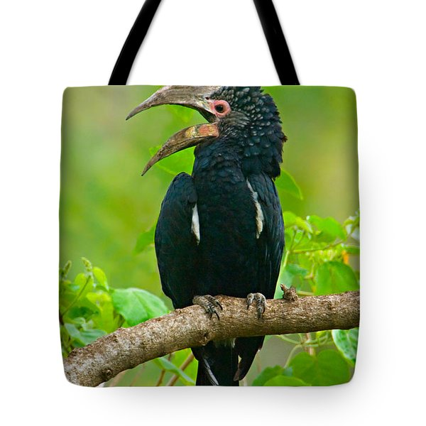 Silvery-cheeked Hornbill Perching Tote Bag by Panoramic Images